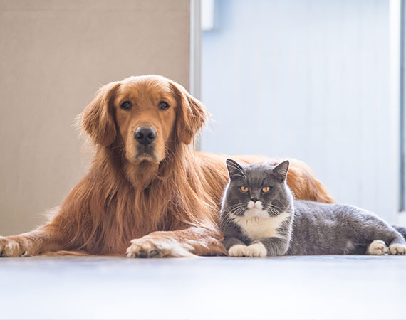 Pet Agreements | Gold Coast | Advance Family Law